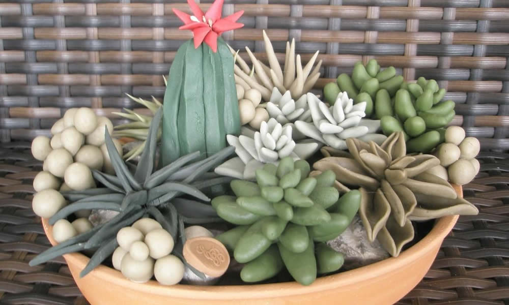 Coltiva il tuo giardino con piante grasse - Piante x giardino ...