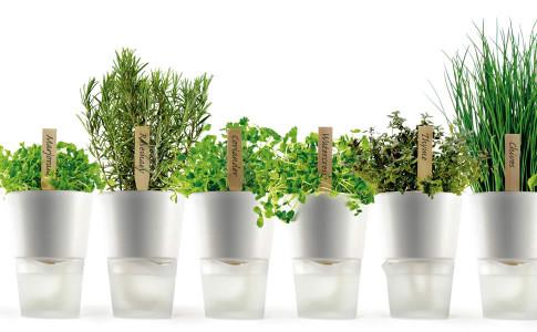 erbe aromatiche in vaso