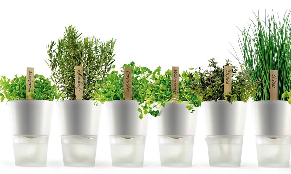 Coltivare le erbe aromatiche in vaso - Erbe aromatiche in casa ...