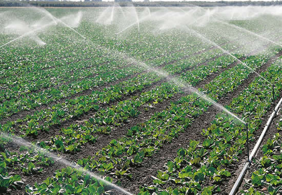orto irrigato