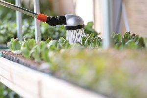 come fare orto bio in casa