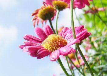 fiori che annunciano la primavera