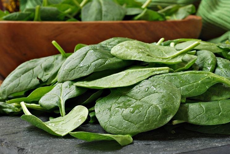 coltivazione-spinaci