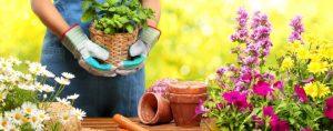 Attrezzi per agricoltura e giardinaggio
