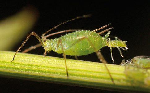 insetti da giardino più distruttivi