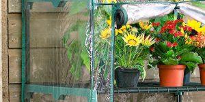 curare le piante d'inverno