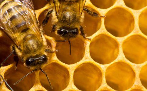 come diventare apicoltore