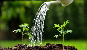 Trucchi contro la siccità