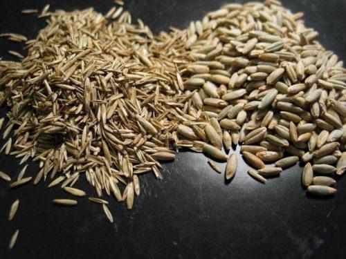 miscuglio di semi per prato residenziale