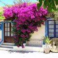 Le più belle piante rampicanti da giardino