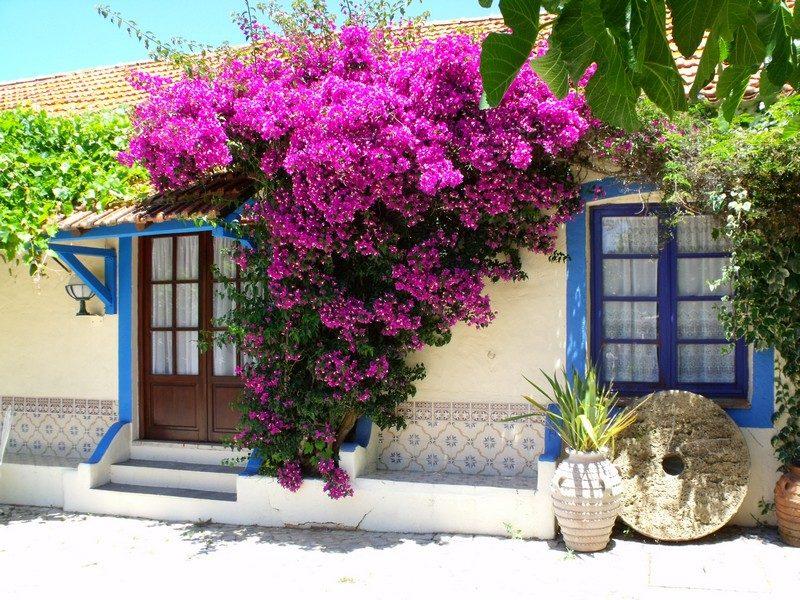 Le pi belle piante rampicanti da giardino for Piante da frutto rampicanti
