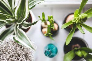 house plants in vaso