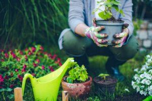 curare il giardino mani