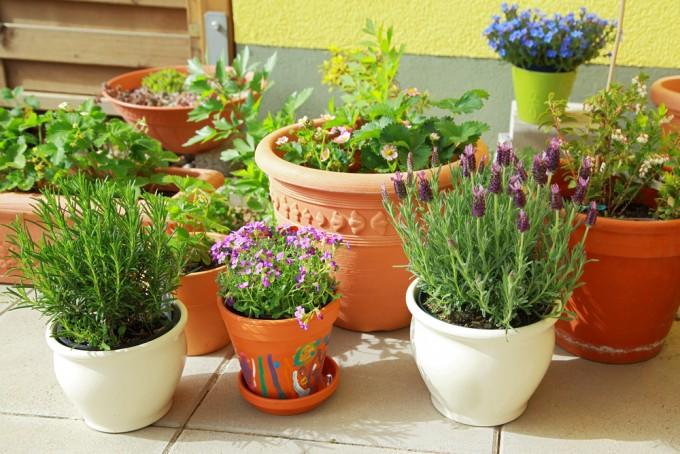 piante repellenti