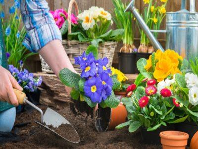 Check-list-primavera