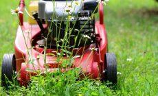 quando tagliare l'erba