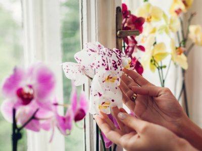 come curare le orchidee